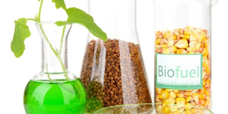 conceptual photo of biofuel