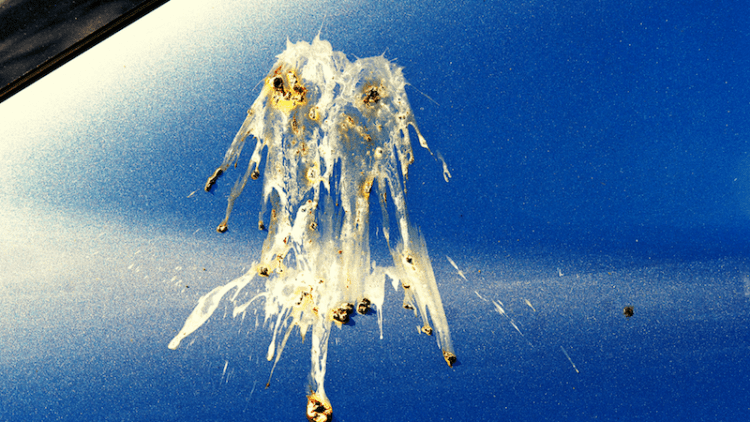 How to remove bird poo from your car