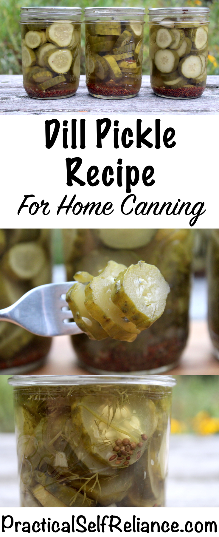 Dill Pickle Recipe for Canning ~ Safely Preserve Dill Pickles at Home #pickles #dillpickles #recipe #pickling #canning #foodpreservation #homesteading #selfsufficiency #prepper