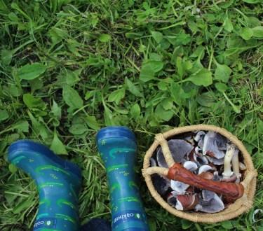 Growing Mushrooms with Kids