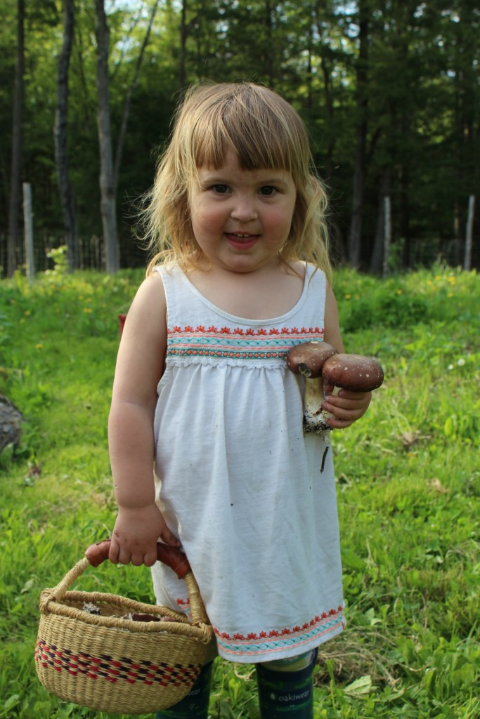 Harvesting Wine Cap Mushrooms with Kids