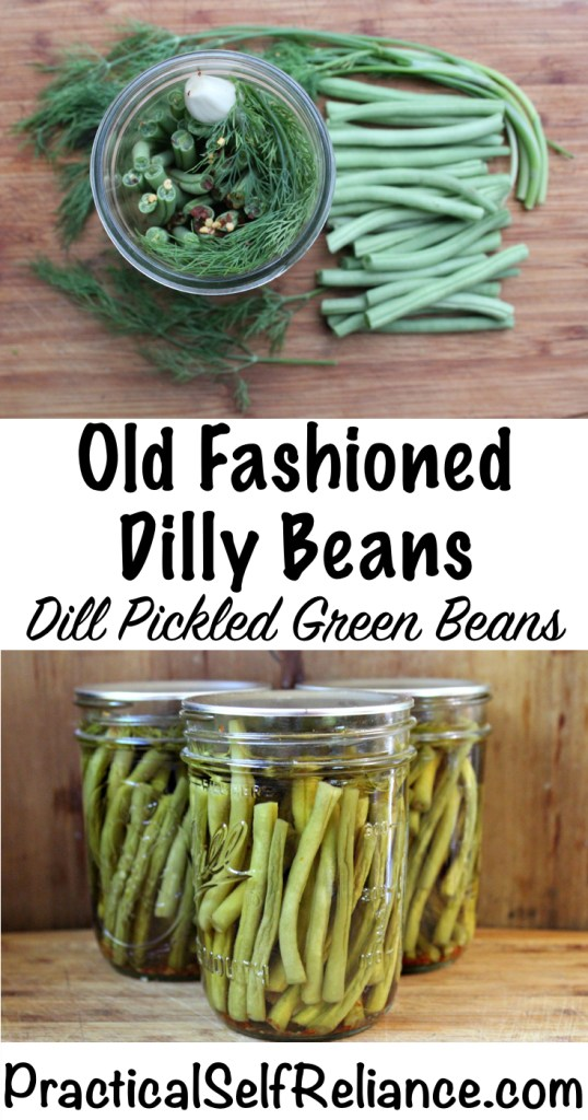 Dill Pickled Green Beans #dillybeans #dillpickles #pickles #greenbeans #canning #foodpreservation #preservingfood #homesteading #greenbeanrecipes