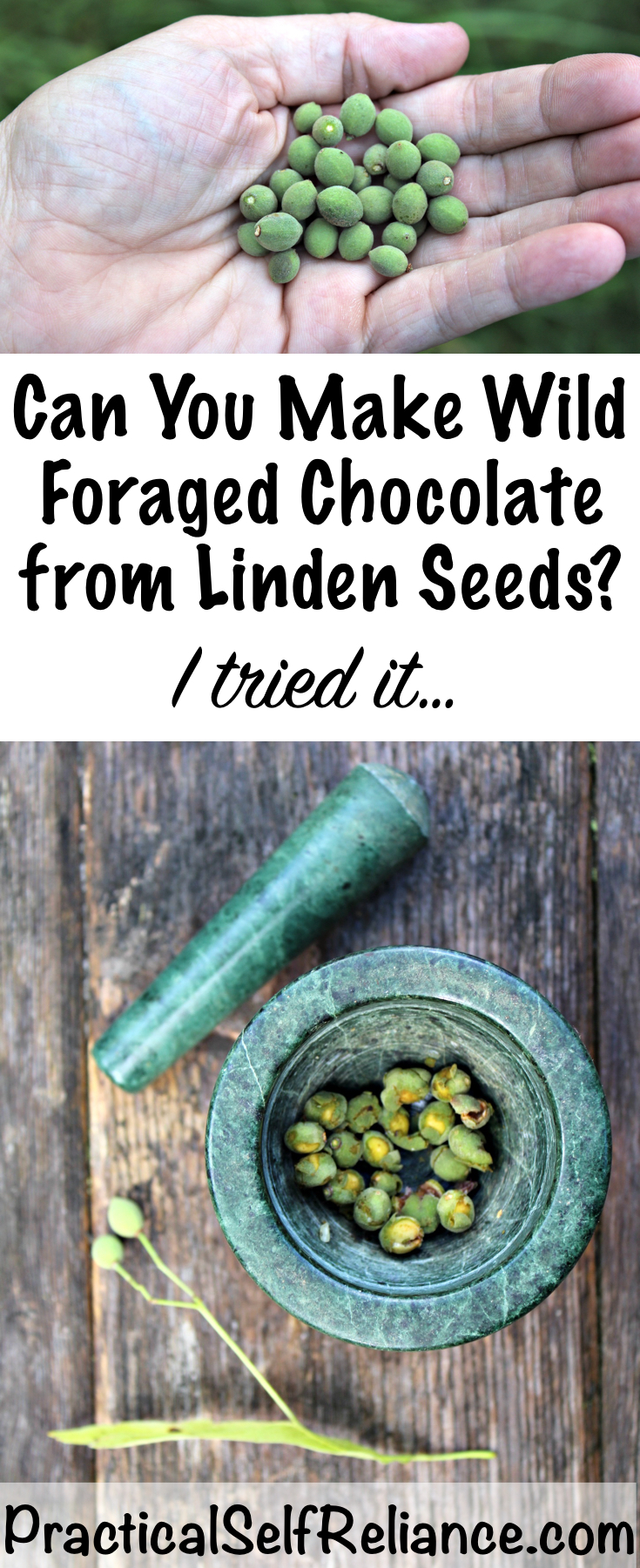 Can you make chocolate from Linden seeds? ~ My Wild Foraged Chocolate Attempt