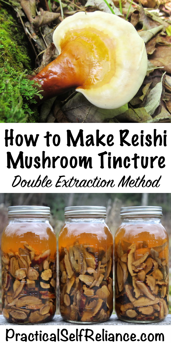 How to Make Reishi Mushroom Tincture ~ Double Extraction Mushroom Tincture