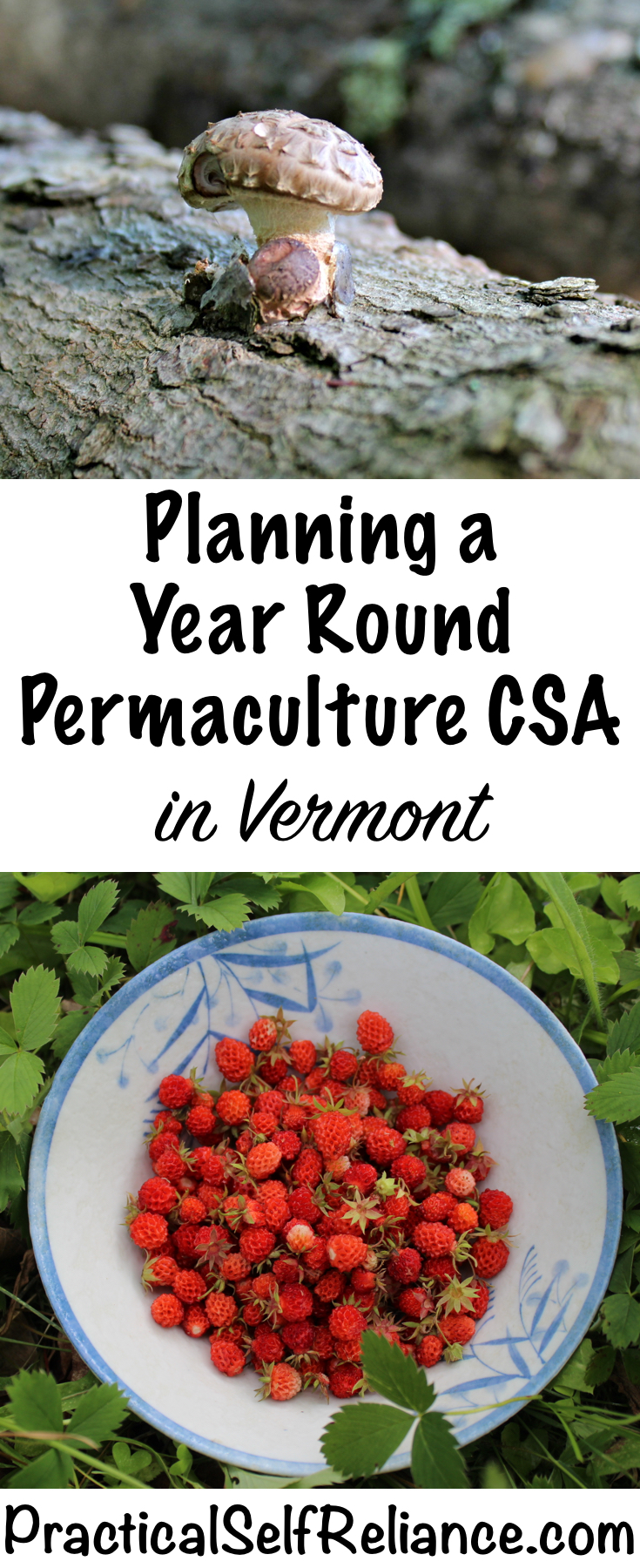 Planning a Year Round Permaculture CSA in Vermont