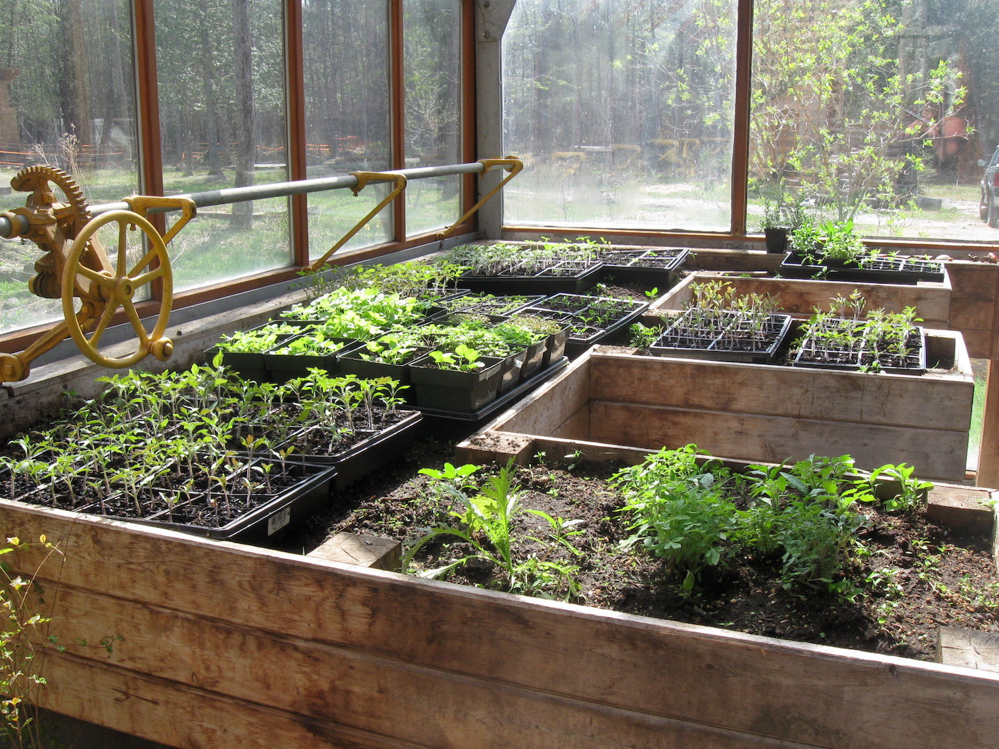 Starting Seeds in an Attached Greenhouse