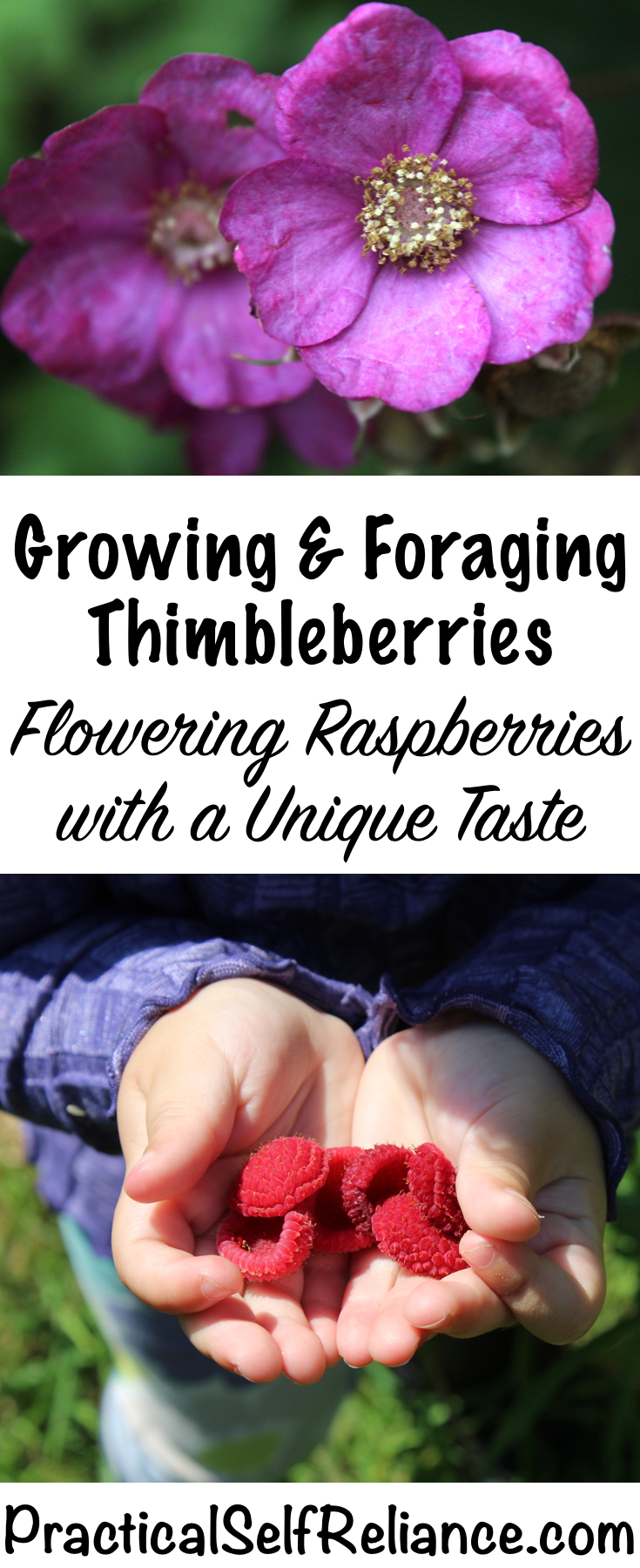 Growing and Foraging Thimbleberries ~ For Food and Medicine