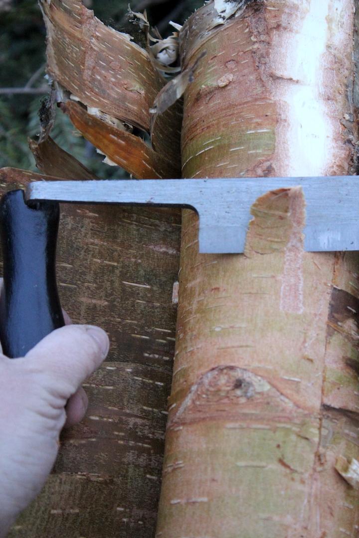 Birch Bark and Draw Knife