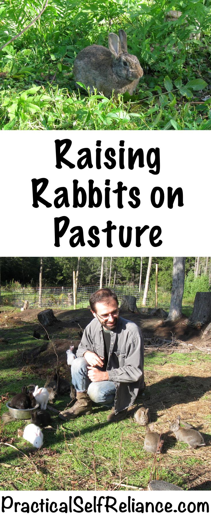 Raising Rabbits on Pasture #rabbits #raisingrabbits #pastureraised #permaculture  #homestead #homesteading #selfsufficiency #selfreliant #preparedness