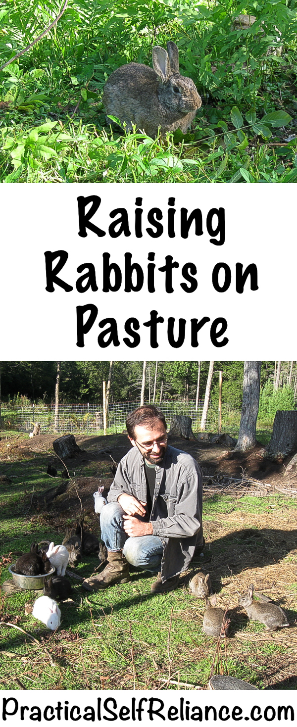 Raising Rabbits on Pasture #rabbits #raisingrabbits #pastureraised #permaculture #homestead #homesteading #selfsufficiency #selfreliant #preparedness