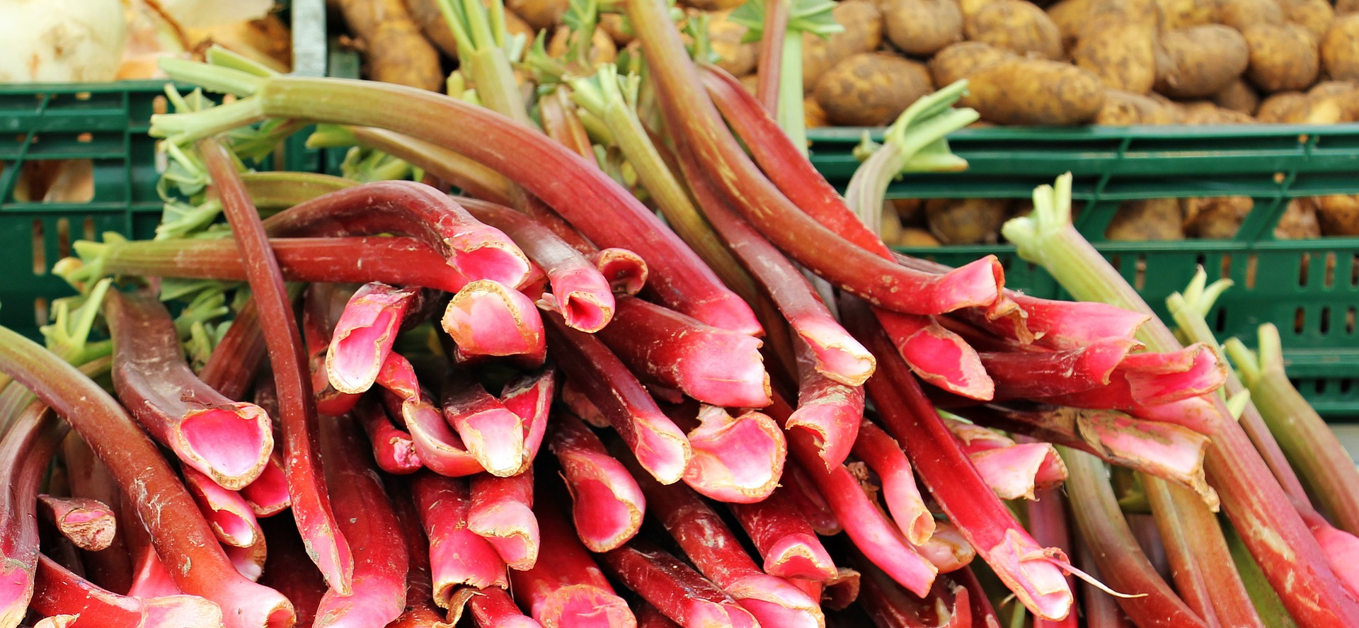 Rhubarb for Cooking into Sweet and Savory Recipes