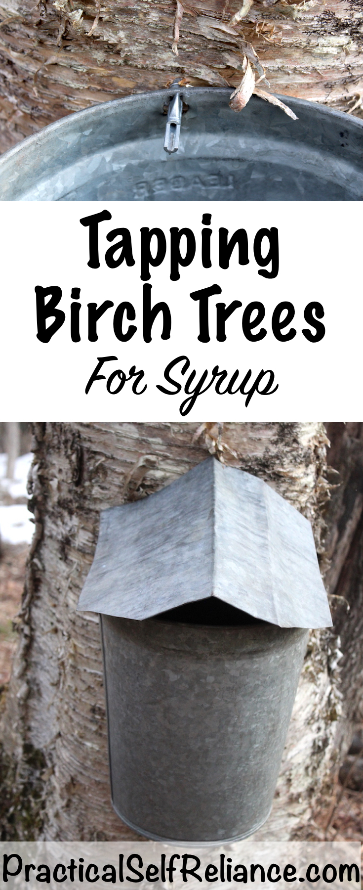 Tapping Birch Trees for Syrup #birchtrees #tappingtrees #makingsyrup #homestead #homesteading #selfsufficiency #selfreliant #preparedness #maplesyrup