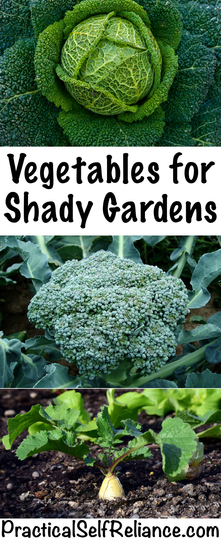 Vegetables for Shady Gardens