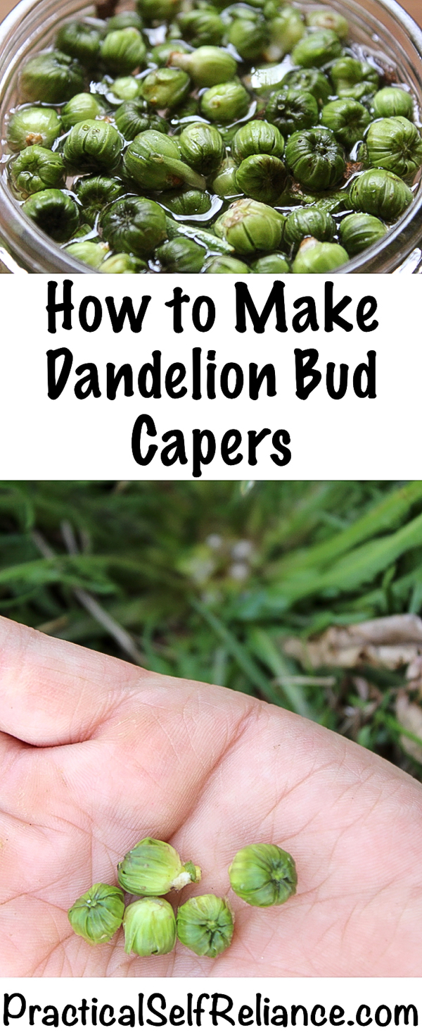 How to Make Dandelion Capers ~ 2 Ways #dandelion #dandelions #capers #fermentedfood #fermentation #foraging #wildfood #forage #selfsufficiency #wildfood #wildcrafting