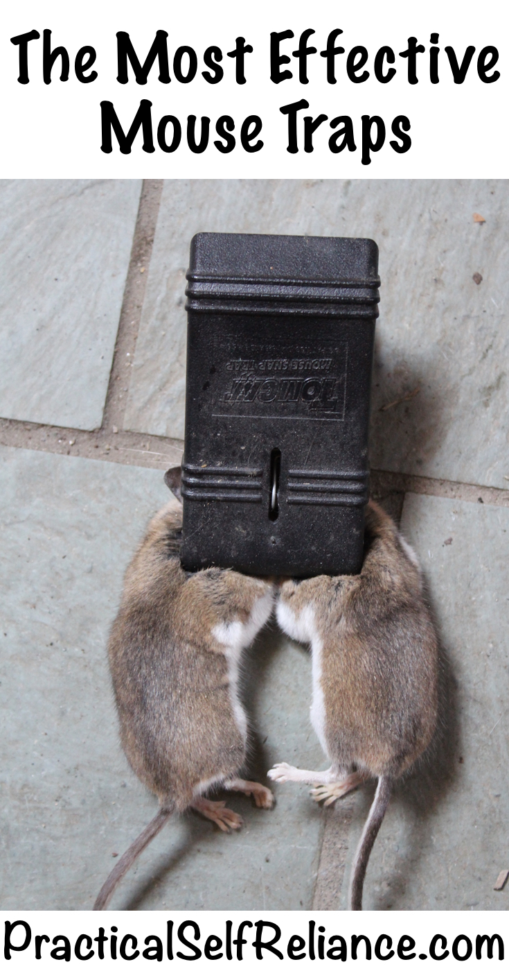 The Most Effective Mouse Traps ~ Best Mouse Traps You Can Buy #rodents #rats #mice #homesteading #homestead #trapping
