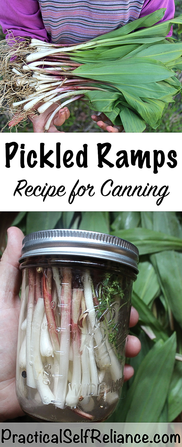 Canning Pickled Ramps ~ Pickled Ramps Recipe #ramps #wildramps #pickles #pickling #picklerecipes #wildfood #forage #foraging #selfsufficiency #canning #foodpreservation #preservingfood