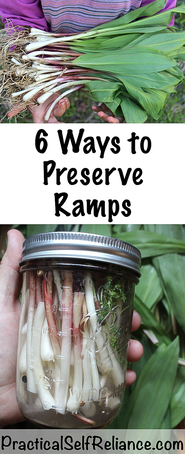 6 Ways to Preserve Ramps (Wild Leeks) #ramps #wildramps #rampsrecipes #foraging #forage #selfsufficiency #wildfood #wildcrafting #foodpreservation #preservingfood