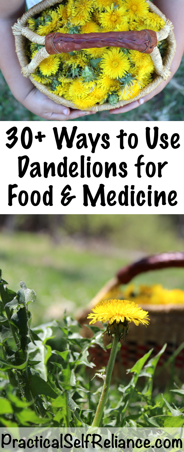 30+ Ways to Use Dandelions for Food and Medicine