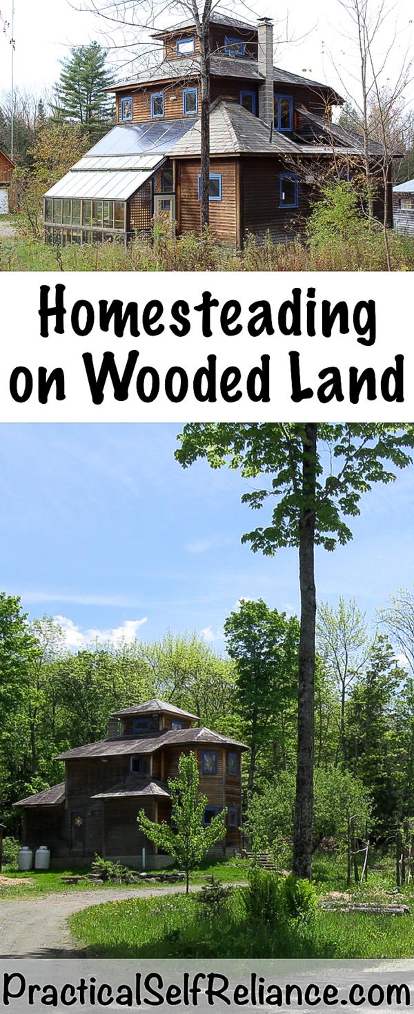Homesteading On Wooded Land #homesteading #homestead #homesteader #woods #woodland #selfreliant #selfsufficiency