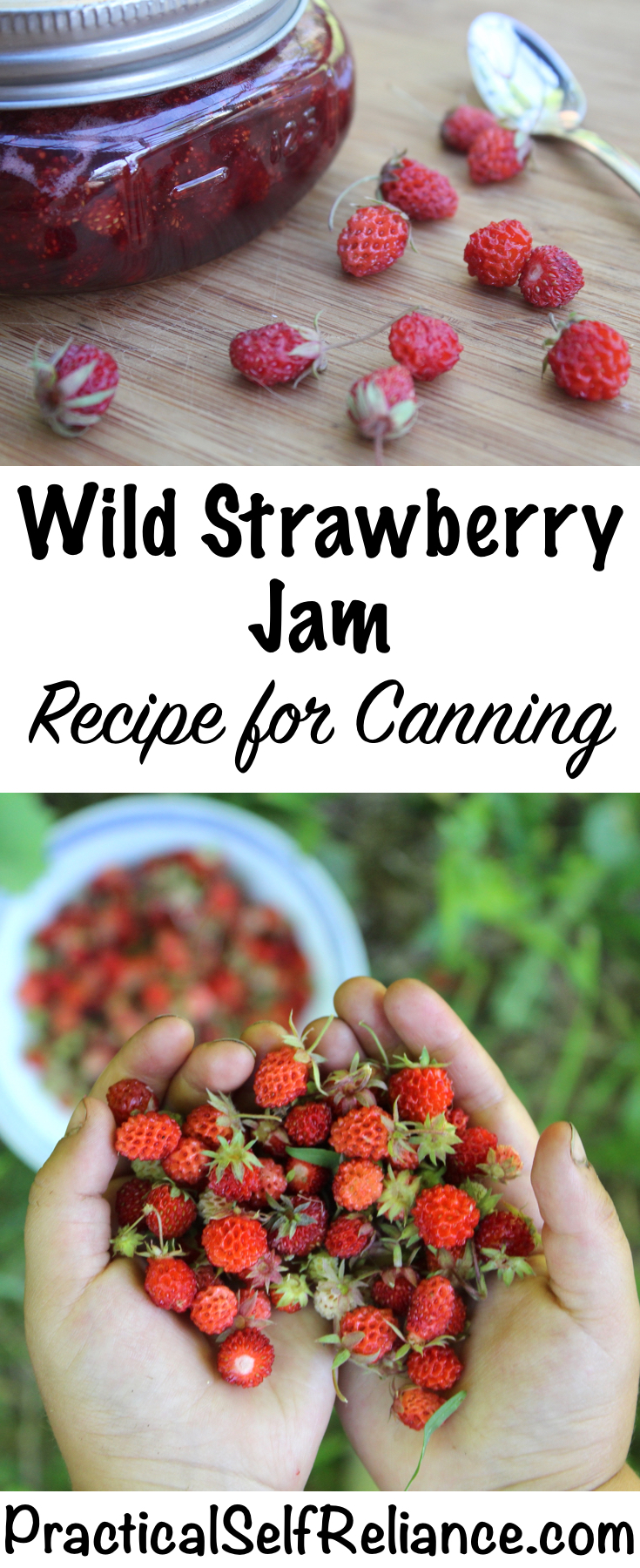 Wild Strawberry Jam Recipe for Canning