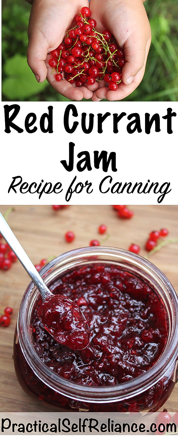 Red Currant Jam Recipe for Canning #redcurrant #recipe #jamrecipe #jam #canning #foodpreservation #homesteading #berryrecipe #berryjam #currants