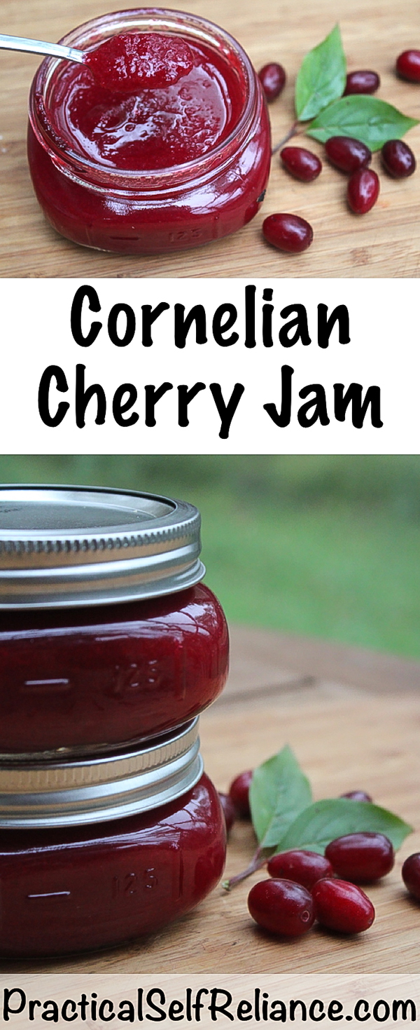Cornelian Cherry Jam Recipe for Canning ~ Dogwood Cherry Jam #cornelian #cherries #recipes #canning #foodpreservation #jamrecipes #jam #orchard #homesteading #selfsufficiency #growingfood #wildfood #foraging