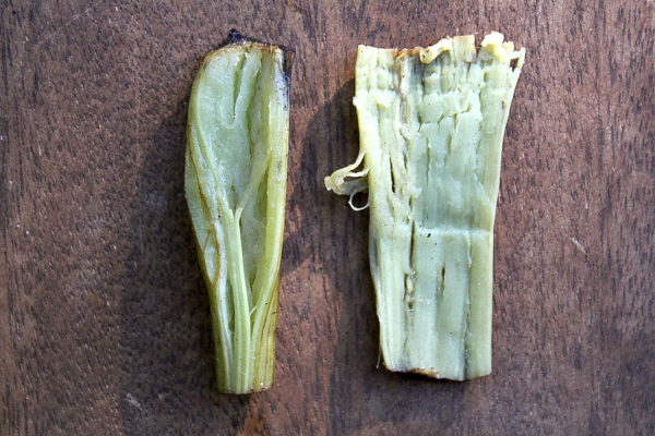 Burdock Stem Interior