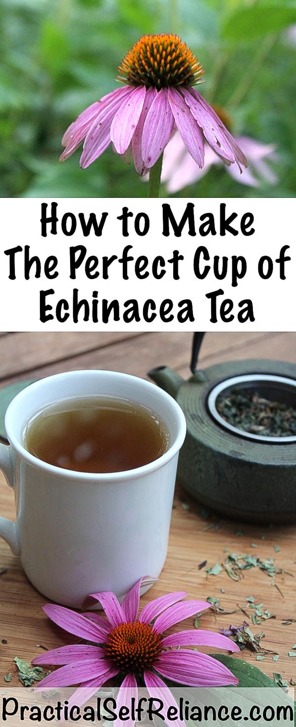 How to Make Echinacea Tea for Immune System Support #echinacea #tea #remedies #tearecipes #herbaltea #herbalism #medicine #coldandflu#immunesystem #teaforhealth