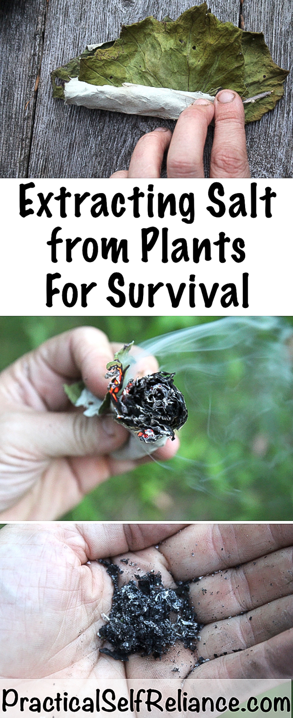 Extracting Salt from Plants for Survival #salt #survival #shtf #preparedness #prepper #survivalist #homesteading #selfsufficiency #selfreliant