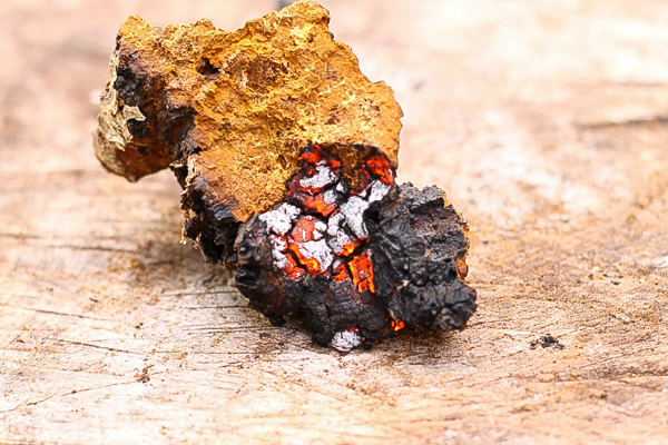 using chaga as a firestarter