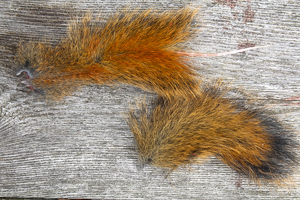 Squirrel Tail Completely Removed