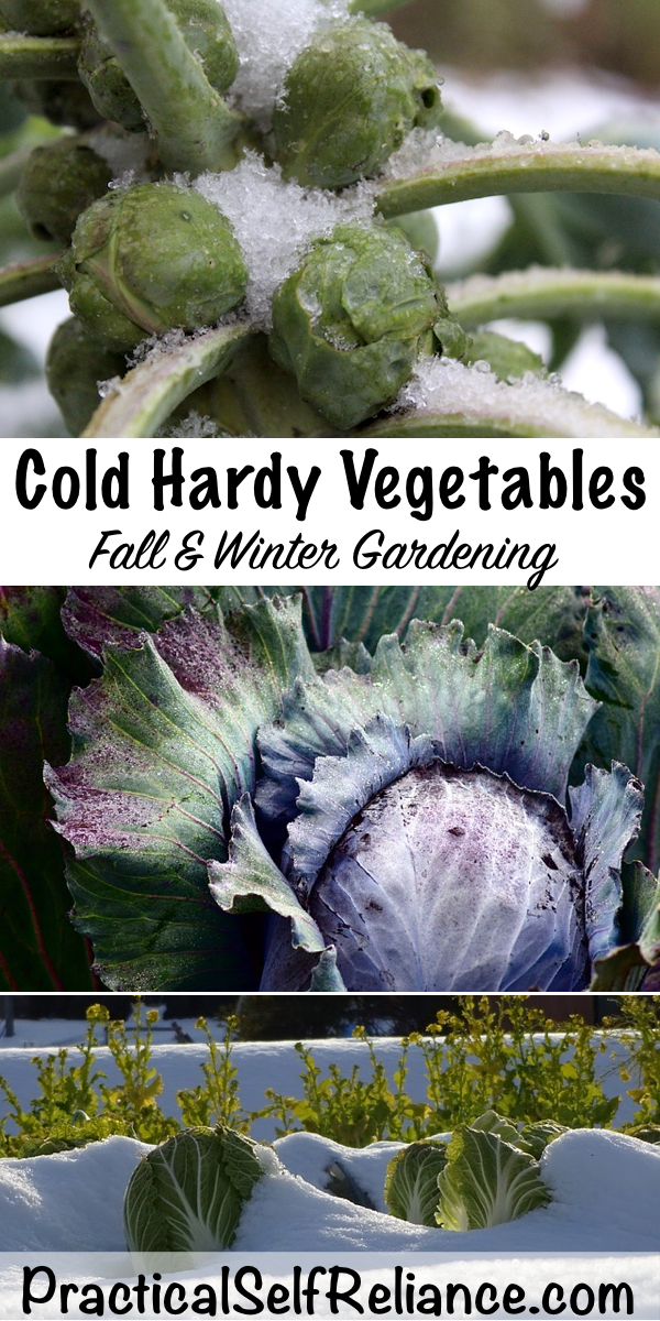 Cold Hardy Vegetables for Fall Gardening ~ Winter Gardening