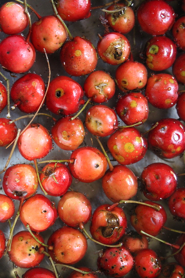 Cooking Hawthorn Fruits for jelly