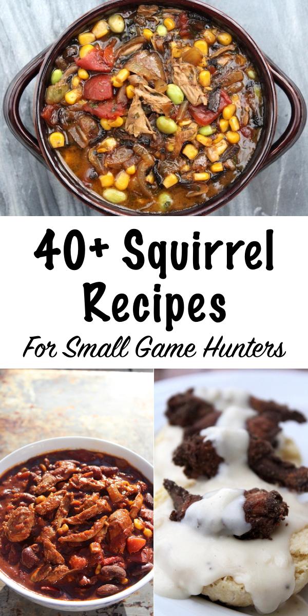 40+ Squirrel Recipes for Small Game Hunters ~ Wild Game Recipes #squirrel #recipe #howtocook #wildgame #hunting #survivalist #prepper #homesteading