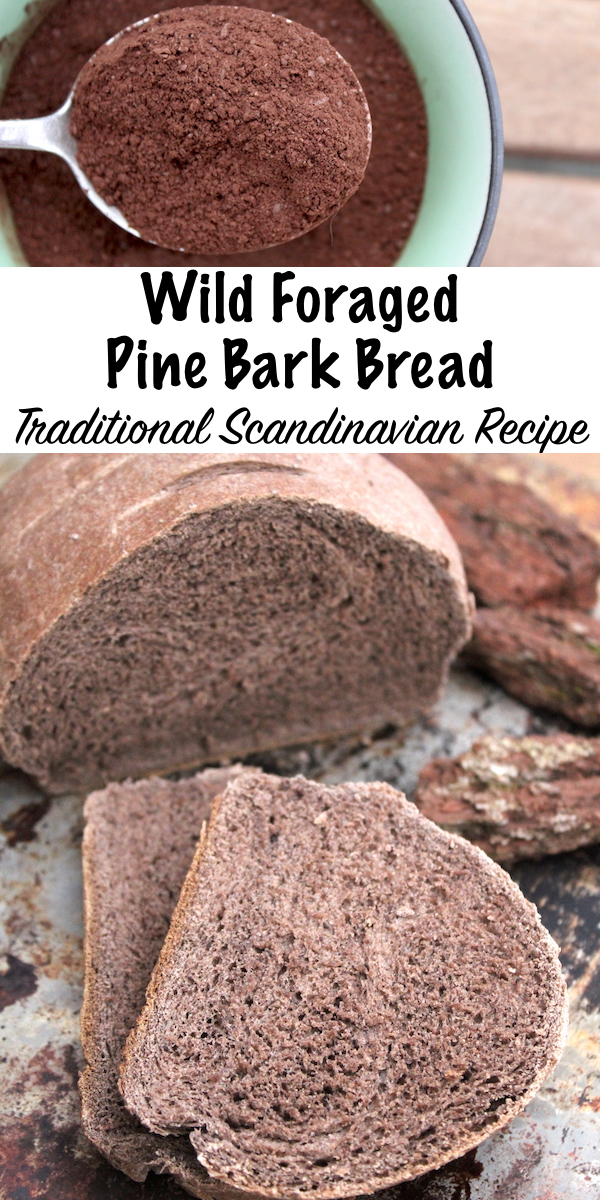 Wild Foraged Pine Bark Bread ~ Traditional Scandinavian Recipe for bread made with the bark of pine trees.  Historical evidence shows it has been eaten for hundreds of years, and it's still made today. #bread #recipe #pine #bark #foraged #foraging #edible #homemade