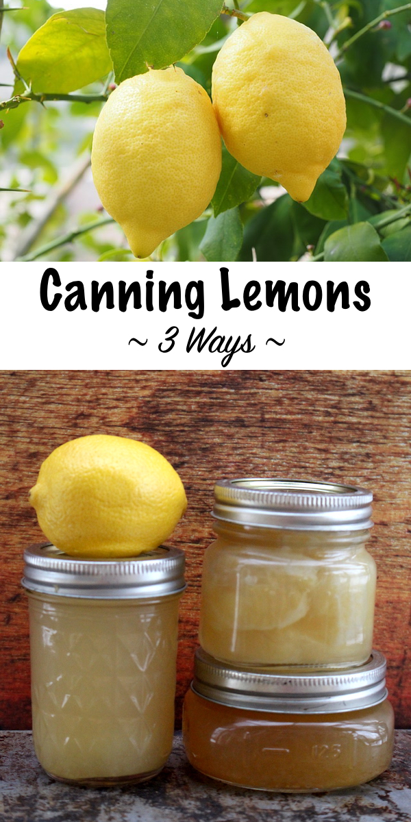 Canning Lemons at Home ~ Three Canning Recipes for Lemons including juice, jam and whole fruit ~ Plus ideas for lemonade concentrate, lemon curd and other lemon preserves