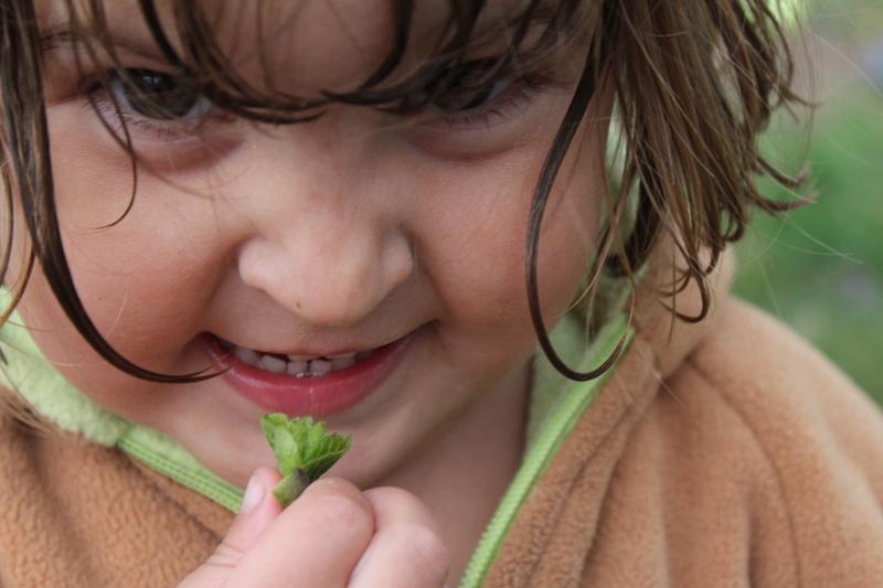 Child and linden leaf bud