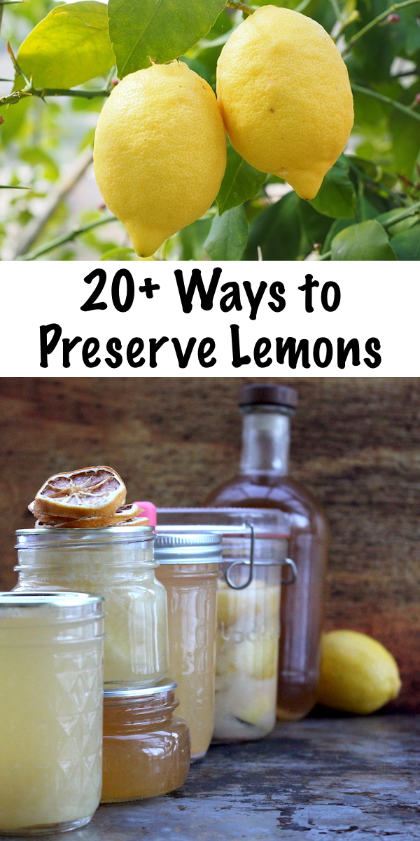 20+ Ways to Preserve Lemons ~ Natural Ways to Preserve Citrus Fruits ~ Canning Lemons, Drying Lemons, Fermenting Lemons and More