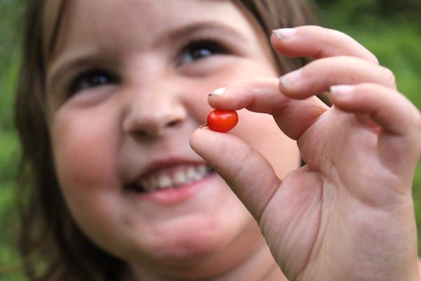 Child holding sea buckthorn fruit