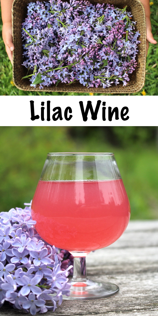 Homemade Lilac Wine ~ Lilacs are delicious edible flowers and they make a wonderful homemade floral wine. Looking for a unique winemaking recipe? Seek no further! #lilac #recipes #homemadewine #foraging #homebrew