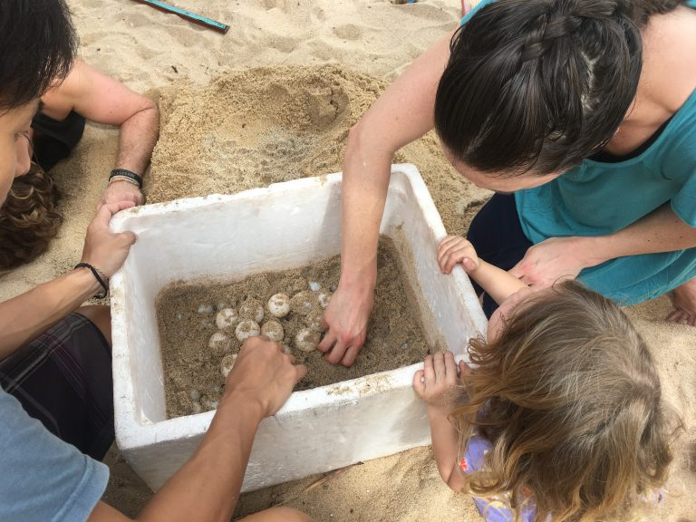 Tending sea turtle eggs at a sanctuary ~ Worldschooling offers unique educational opportunities