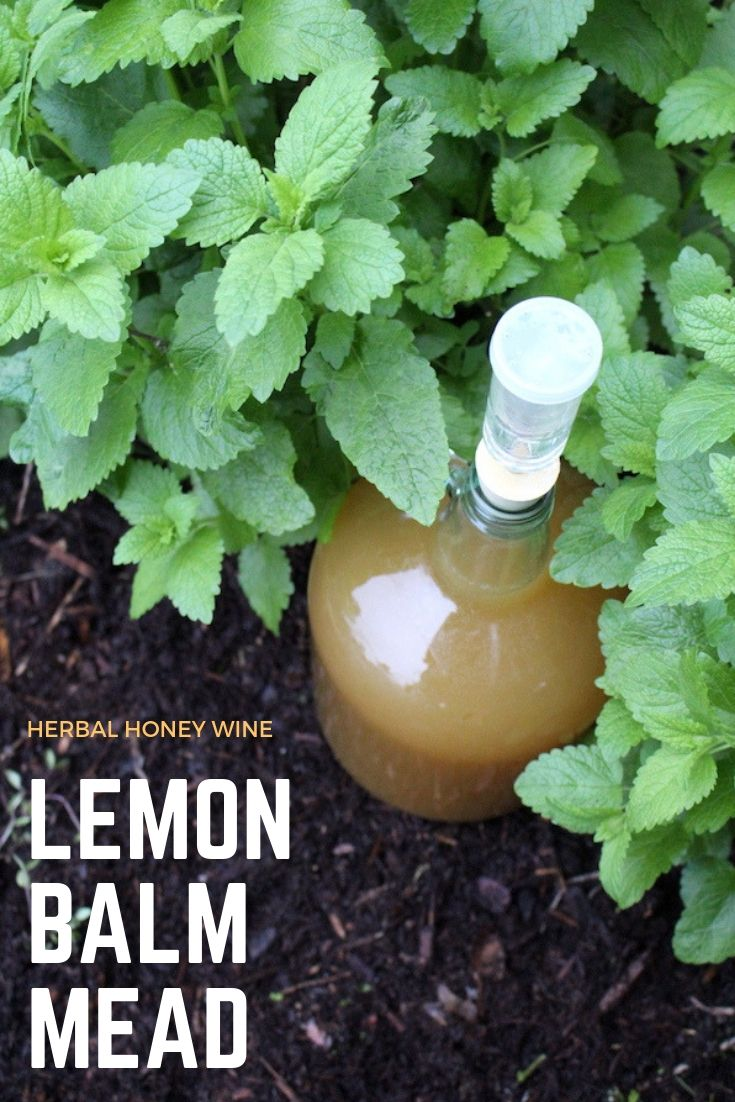 Homemade Lemon Balm Mead (Honey Wine) ~ This simple herbal honey wine is the perfect way to use lemon balm. An easy mead recipe that requires minimal eqiupment, you'll be glad you preserved lemon balm with in a homemade wine. #lemonbalm #lemonbalmrecipes #mead #meadrecipe #homebrew #honeywine #fermentation #fermenteddrinks