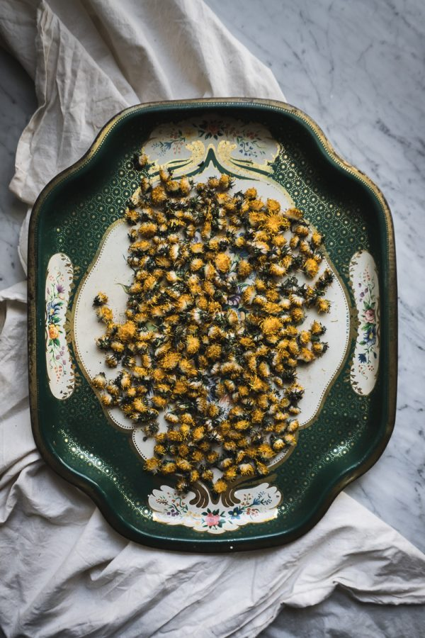 A green metal tray filled with dried dandelion flowers.