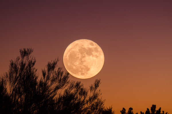 Full moon over tree tops