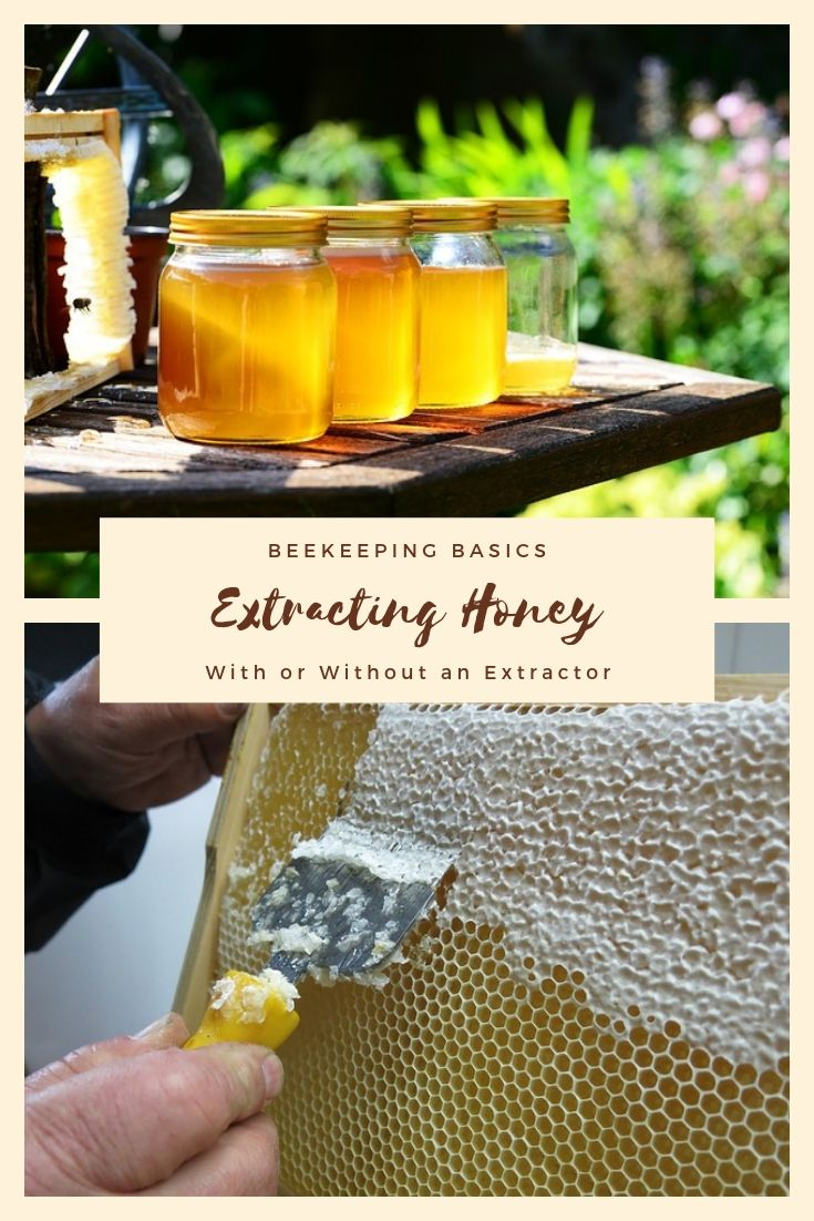 Extracting Honey from Honeycomb (With and Without an Extractor) ~ It can be tricky to harvest honey from a backyard bee hive, especially without investing in an expensive extractor.  Here's how to enjoy home harvested honey, with and without an extractor to pull the honey from the comb.  Part of a beekeeping basics series.