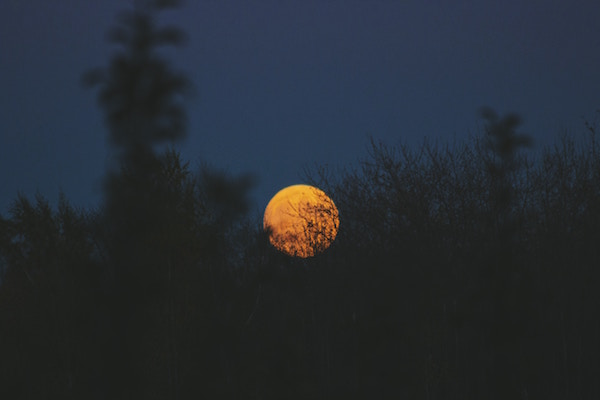 Orange moon rises over bushes