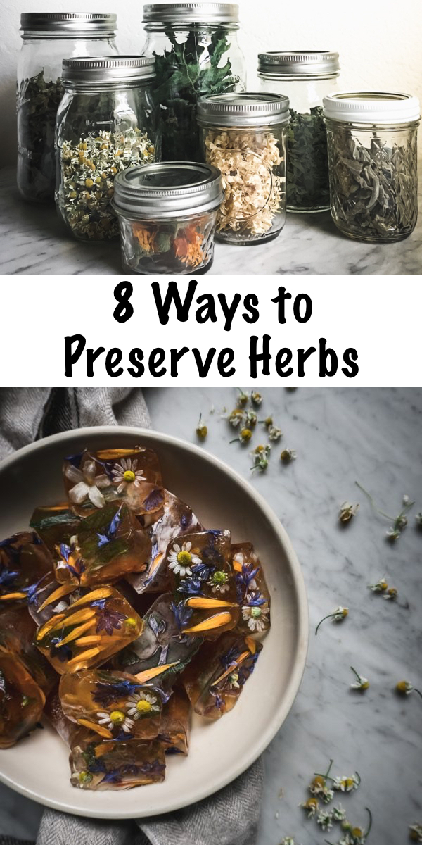 8 Ways to Preserve Herbs ~ There are so many creative ways to preserve both medicinal and culinary herbs. Here's a few fun ways to put up the bounty of your herb garden. #foodpreservation #preservingherbs  #herbs #herbalist #forage #foraging #wildcrafting #survival #homestead