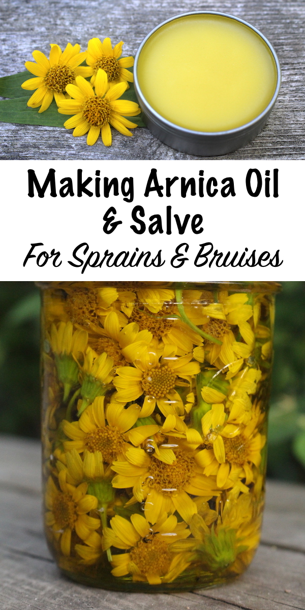 Arnica Oil has long been used as a treatment for sprains, strains and muscle pain. A simple arnica massage oil is easy to make at home, and it can easily be converted to an arnica salve for easier application. #arnica #herbs #herbalist #herbalremedies #herbalism #herbaloil #salves