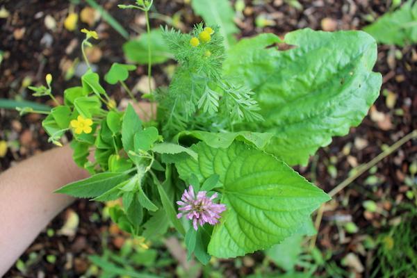 Edible Weeds Bouquet