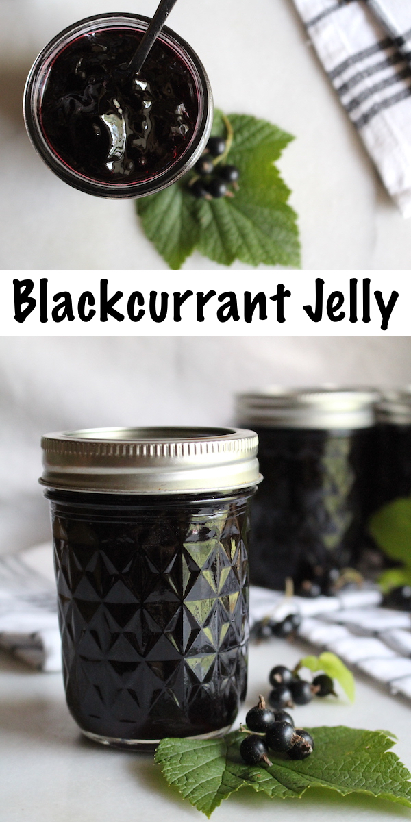 Blackcurrant Jelly ~ This easy homemade jelly only has two ingredients (Black currants and sugar). No pectin required, and safe for canning. #canning #foodpreservation #preservingfood #homestead #selfreliant #selfsufficiency #homesteading #blackcurrant #blackcurrantrecipes
